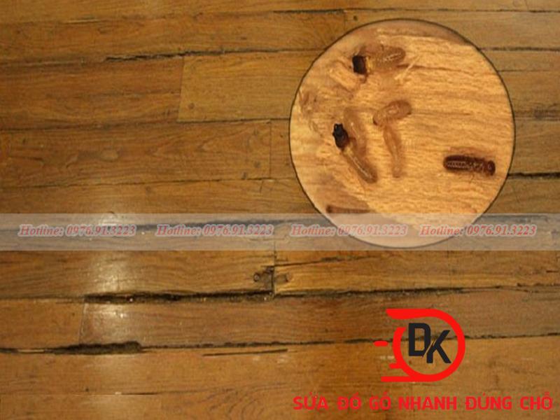 Sửa sàn gỗ bị mối mọt
